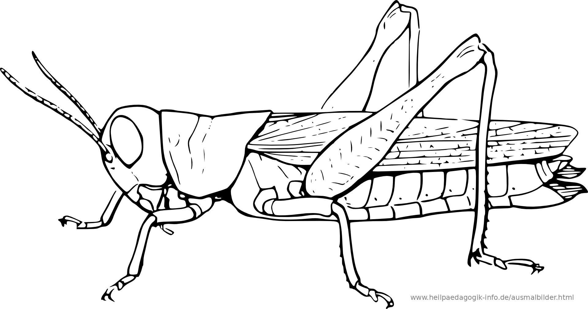 Ausmalbilder Käfer, Schmetterlinge, Insekten
