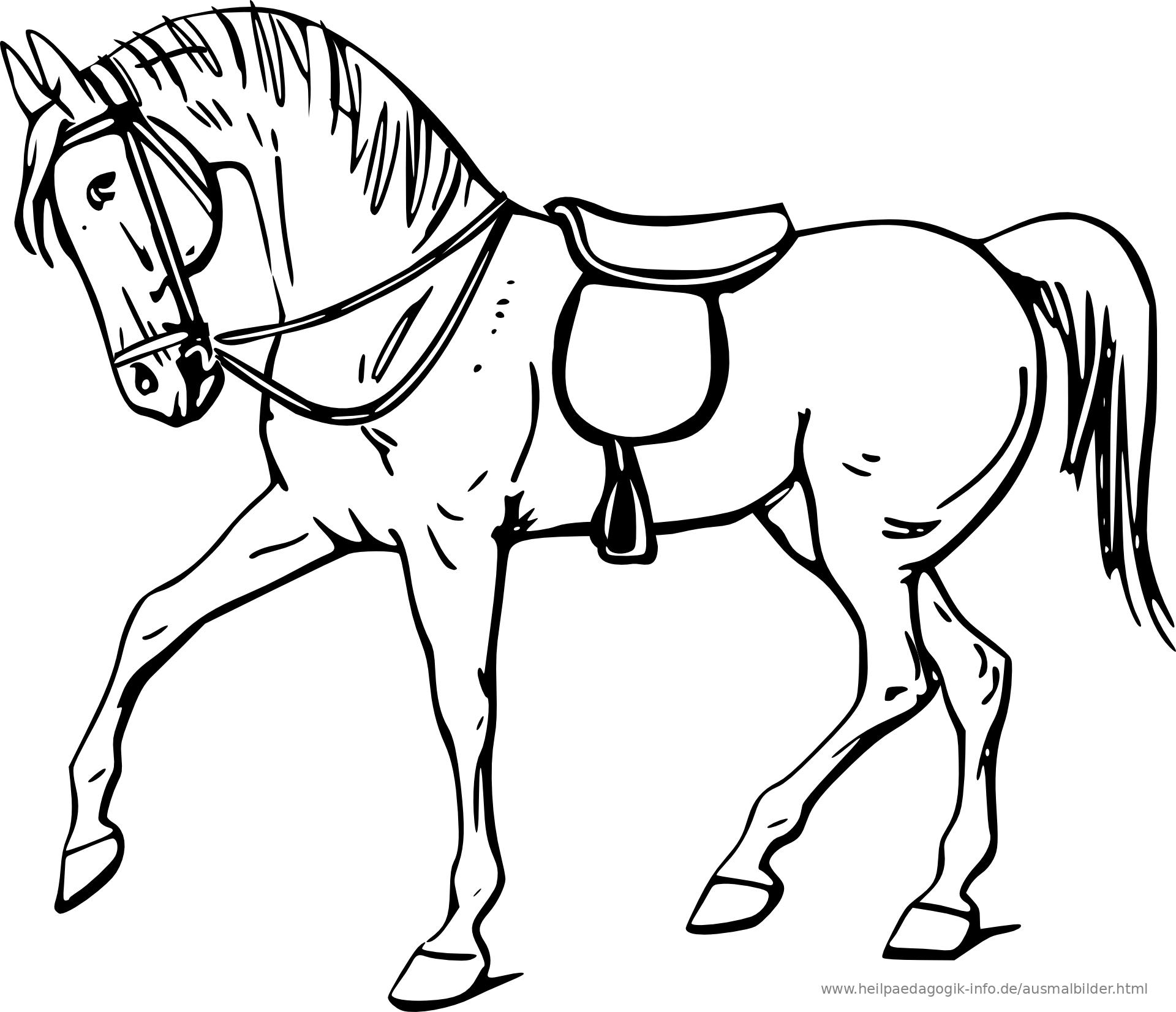 9 Ausmal Bilder Pferde - Besten Bilder von ausmalbilder