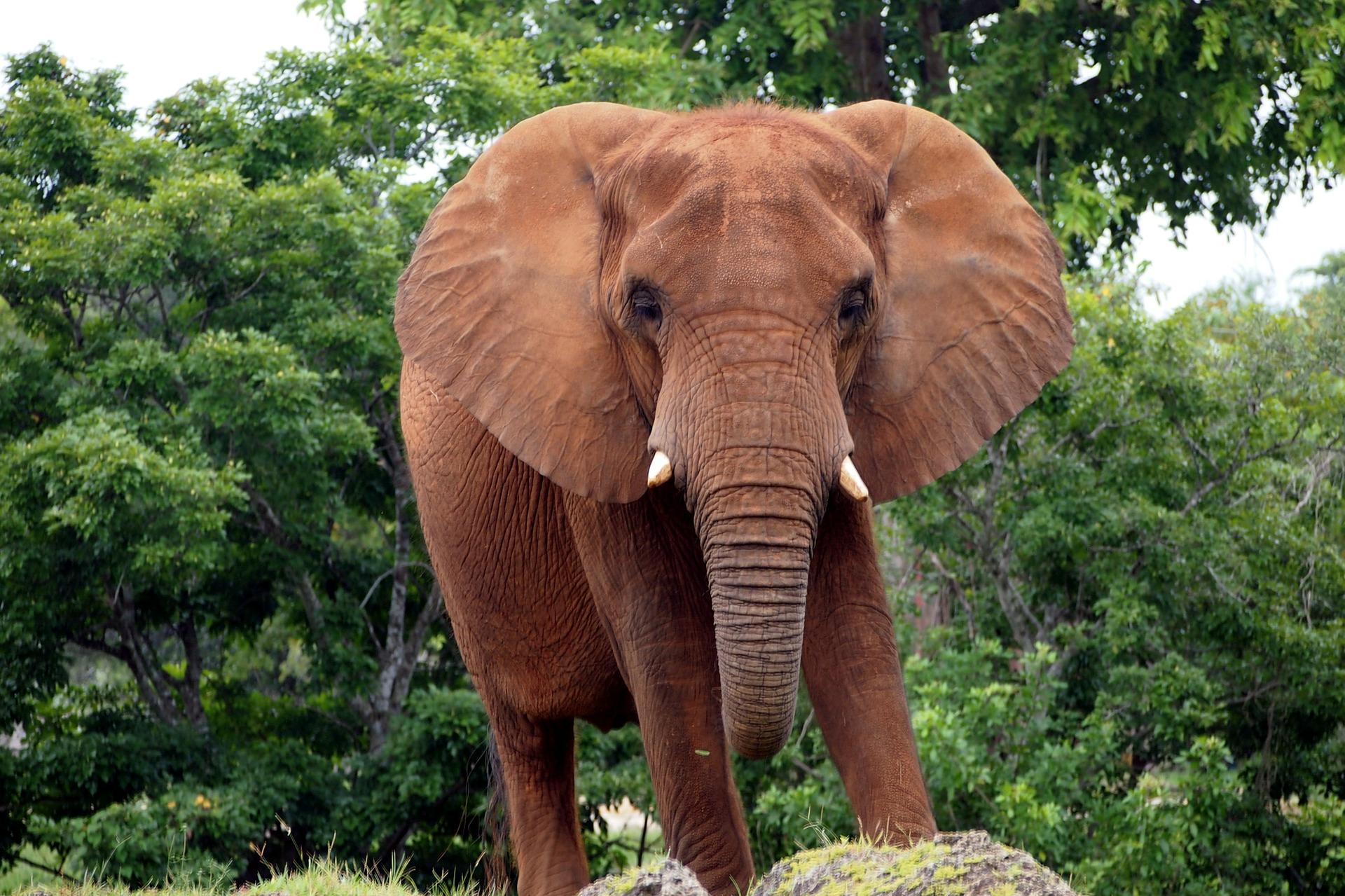 Gedicht Elefant Fant Fant