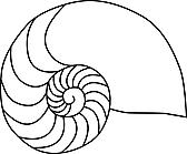 Ausmalbild Malvorlage Muschel
