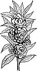 Ausmalbild Malvorlage Rose / Kletterrose