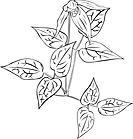 Ausmalbild Malvorlage Pflanze