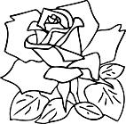 Ausmalbild Malvorlage Rose