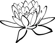 Ausmalbild Malvorlage Seerose