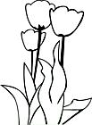 Ausmalbild Malvorlage Tulpen