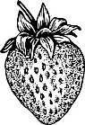 Ausmalbild Malvorlage Erdbeere