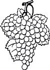 Ausmalbild Malvorlage Weintrauben