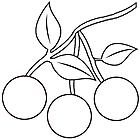 Ausmalbild Malvorlage Kirschen