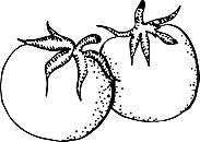 Ausmalbild Malvorlage Tomaten