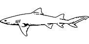 Ausmalbild Malvorlage Hai