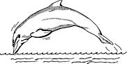 Ausmalbild Malvorlage Delfin