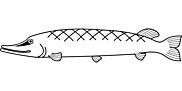 Ausmalbild Malvorlage Fisch Hecht
