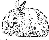 Ausmalbild Malvorlage Hase