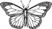 Ausmalbild Malvorlage Schmetterling