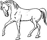 Ausmalbild Malvorlage Pferd
