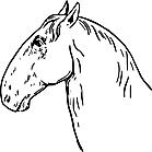 Ausmalbild Malvorlage Pferdekopf