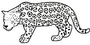 Ausmalbild Malvorlage Leopard