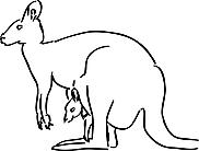 Ausmalbild Malvorlage Känguru