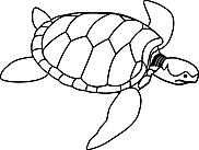 Ausmalbild Malvorlage Schildkröte