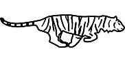 Ausmalbild Malvorlage Tiger