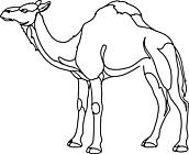 Ausmalbild Malvorlage Kamel