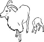 Ausmalbild Malvorlage Ziegen