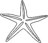Ausmalbild Malvorlage Seestern