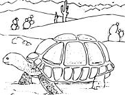 Ausmalbild Malvorlage Schildkröte und Wüste