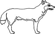 Ausmalbild Malvorlage Wolf