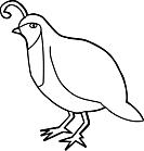 Ausmalbild Malvorlage Vogel
