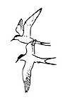 Ausmalbild Malvorlage Vögel
