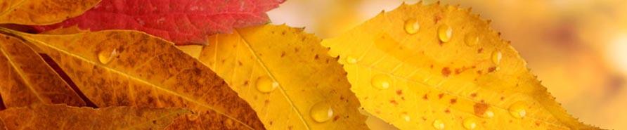 Herbstgedichte Für Kinder