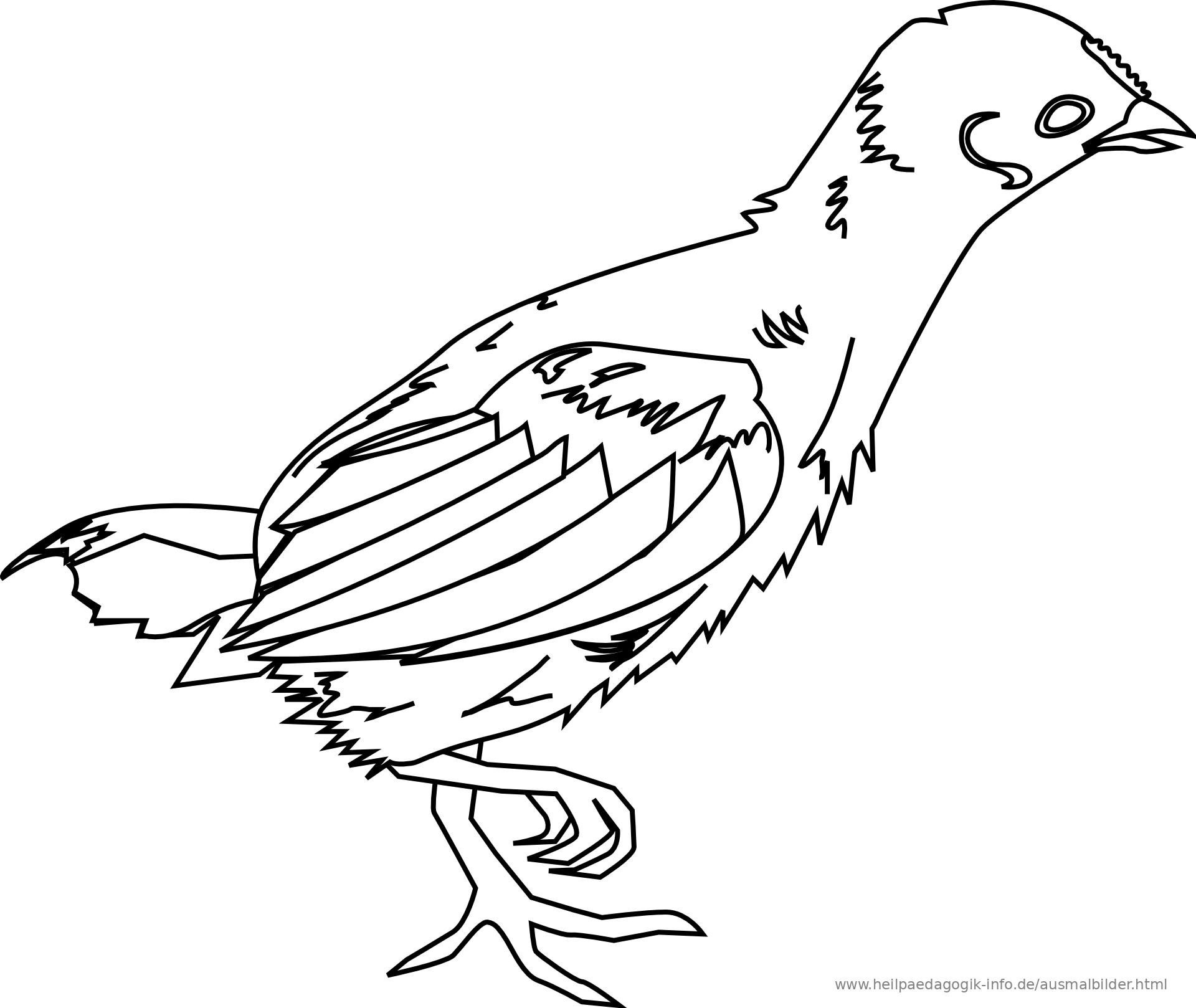 malvorlage lustige vögel kostenlos  ausmalbilder