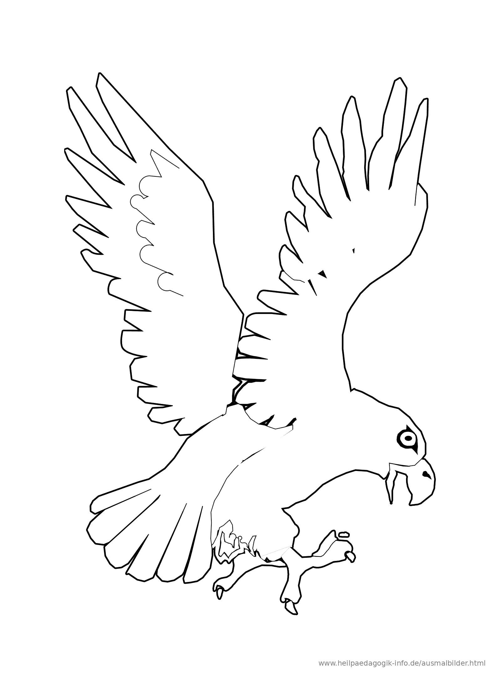 Ausmalbild Adler Als PDF oder PNG anzeigen