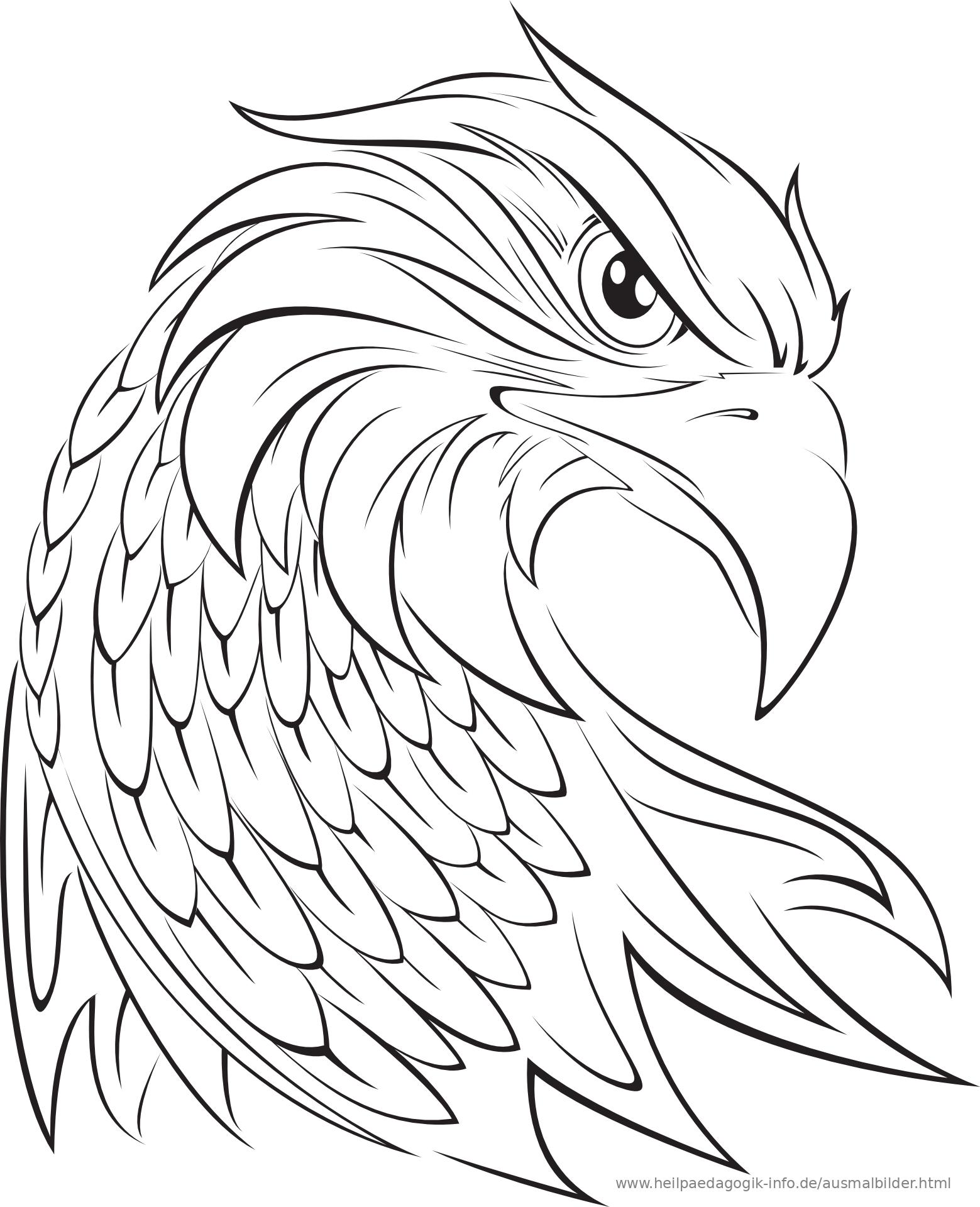 Ausmalbilder Adler &187 Zum Ausdrucken