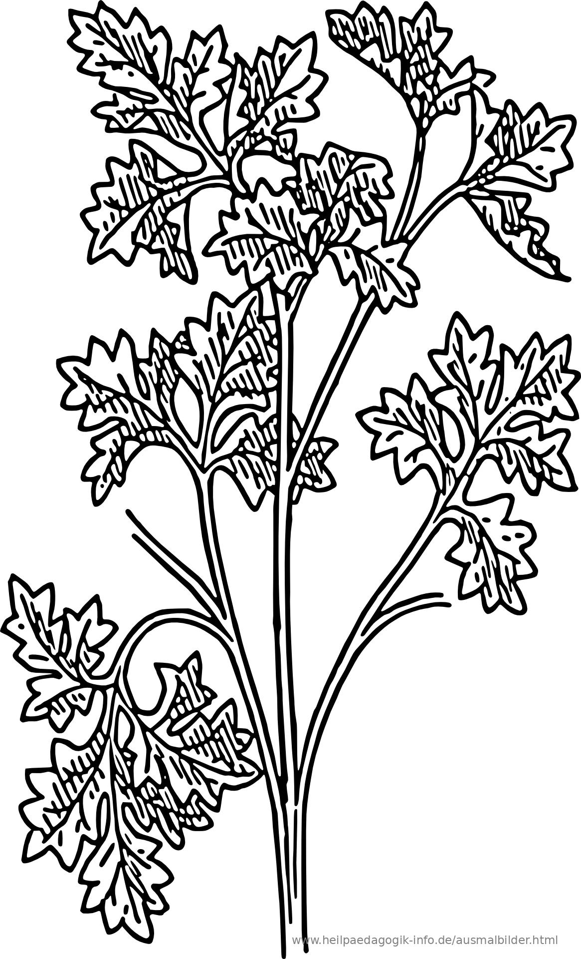 Ausmalbilder Blumen | heimhifi.com