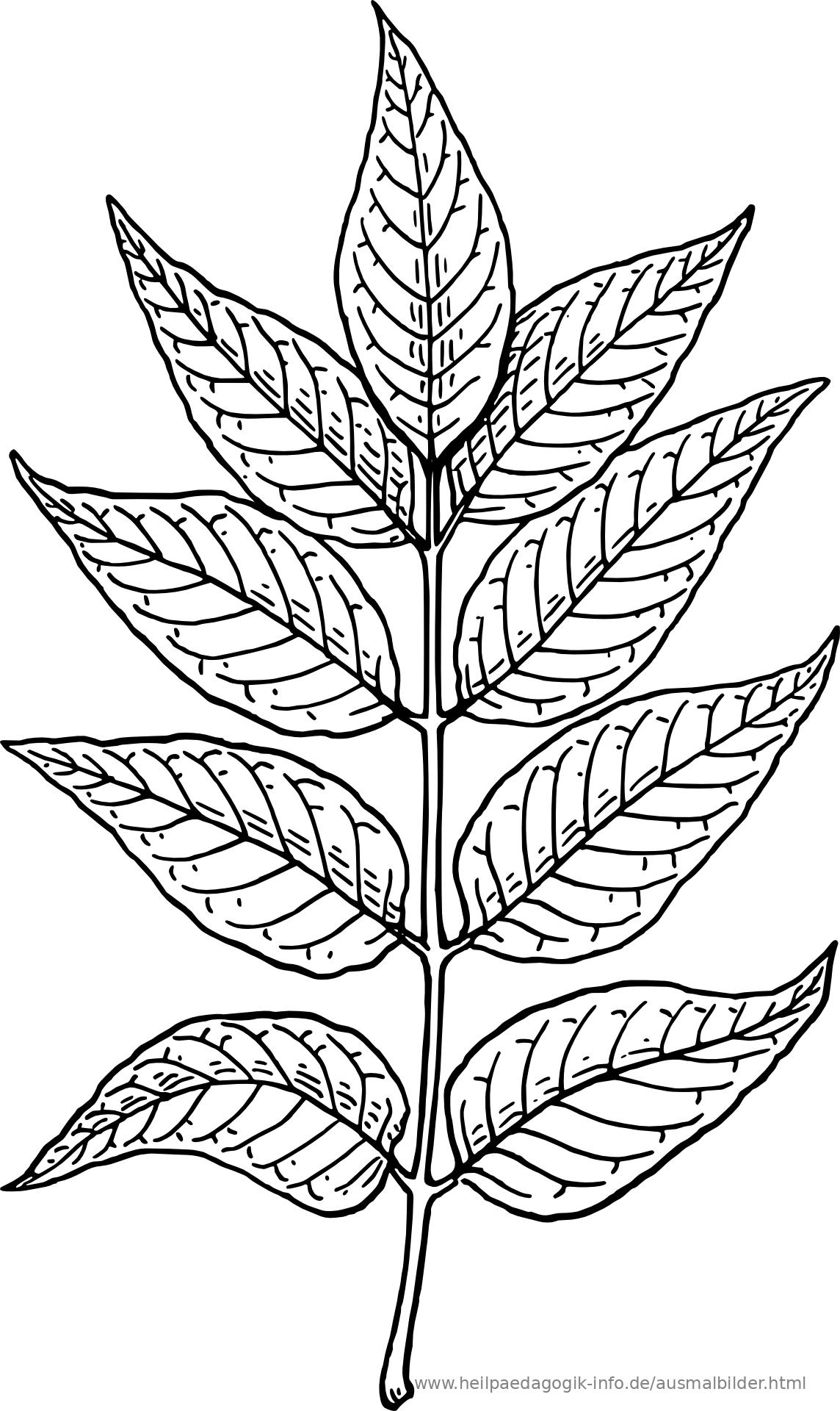 Ausmalbilder Blumen, Bäume, Blätter