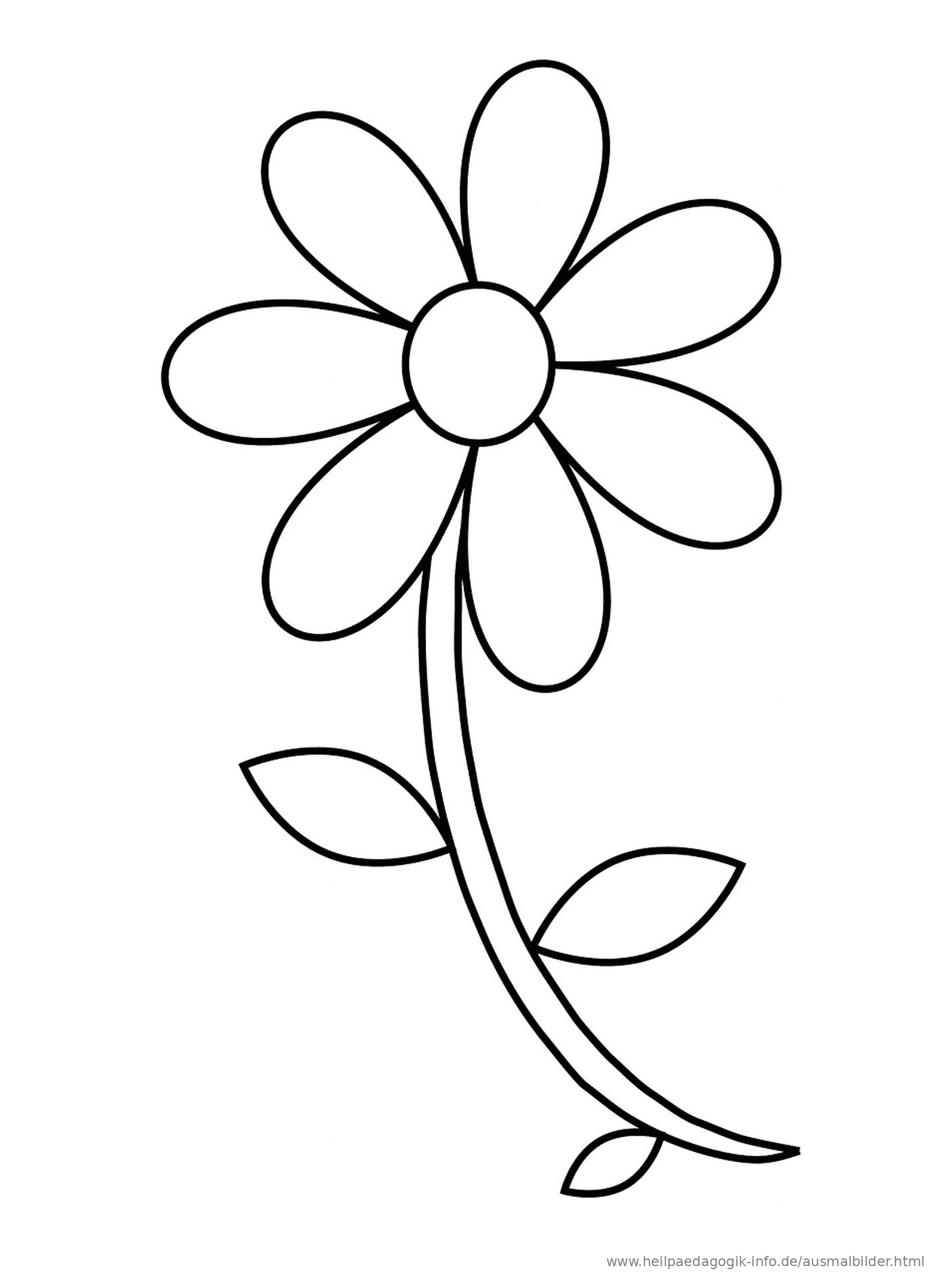Großartig Blume Anatomie Für Kinder Ideen - Menschliche Anatomie ...