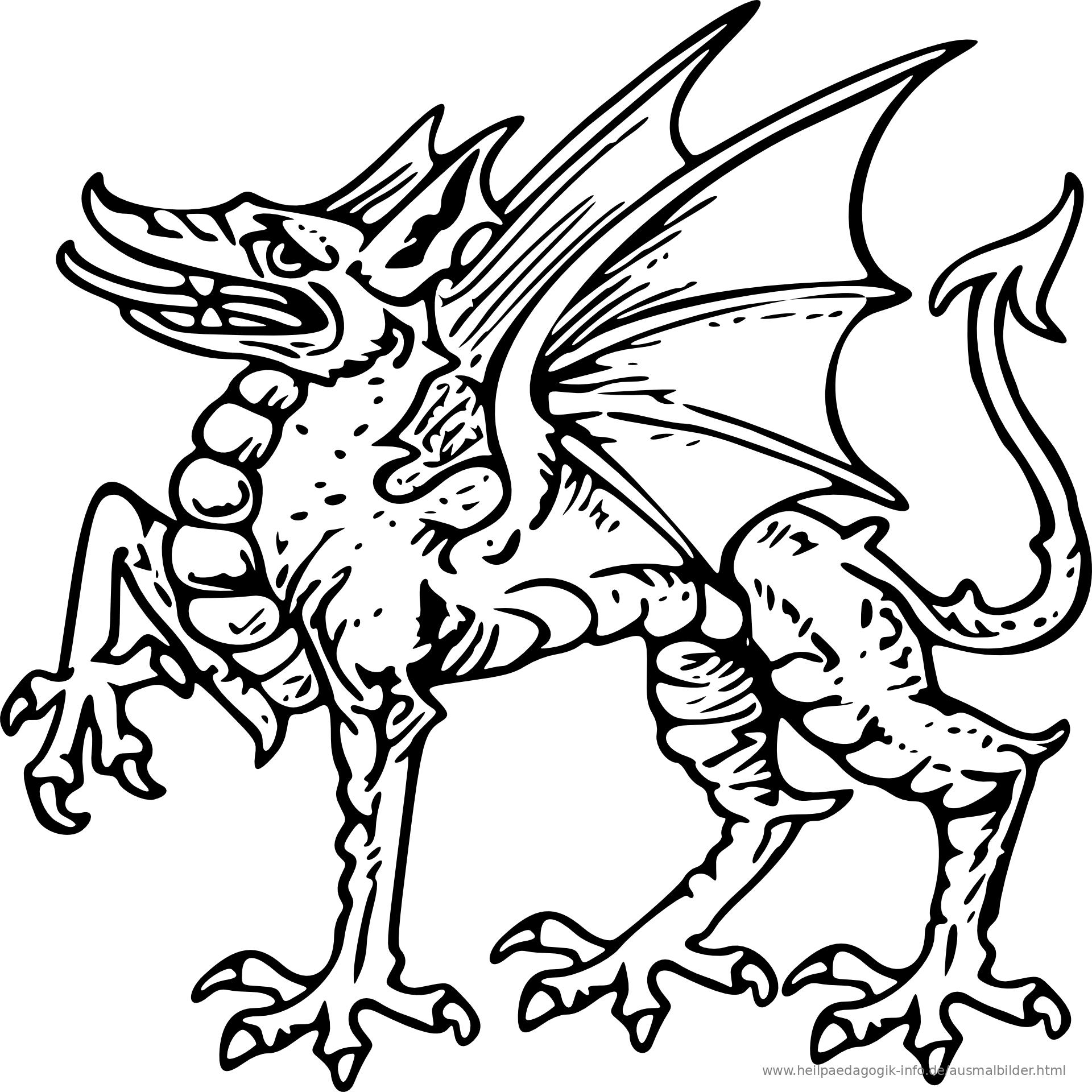 herbst drachen ausmalbilder | top kostenlos färbung seite
