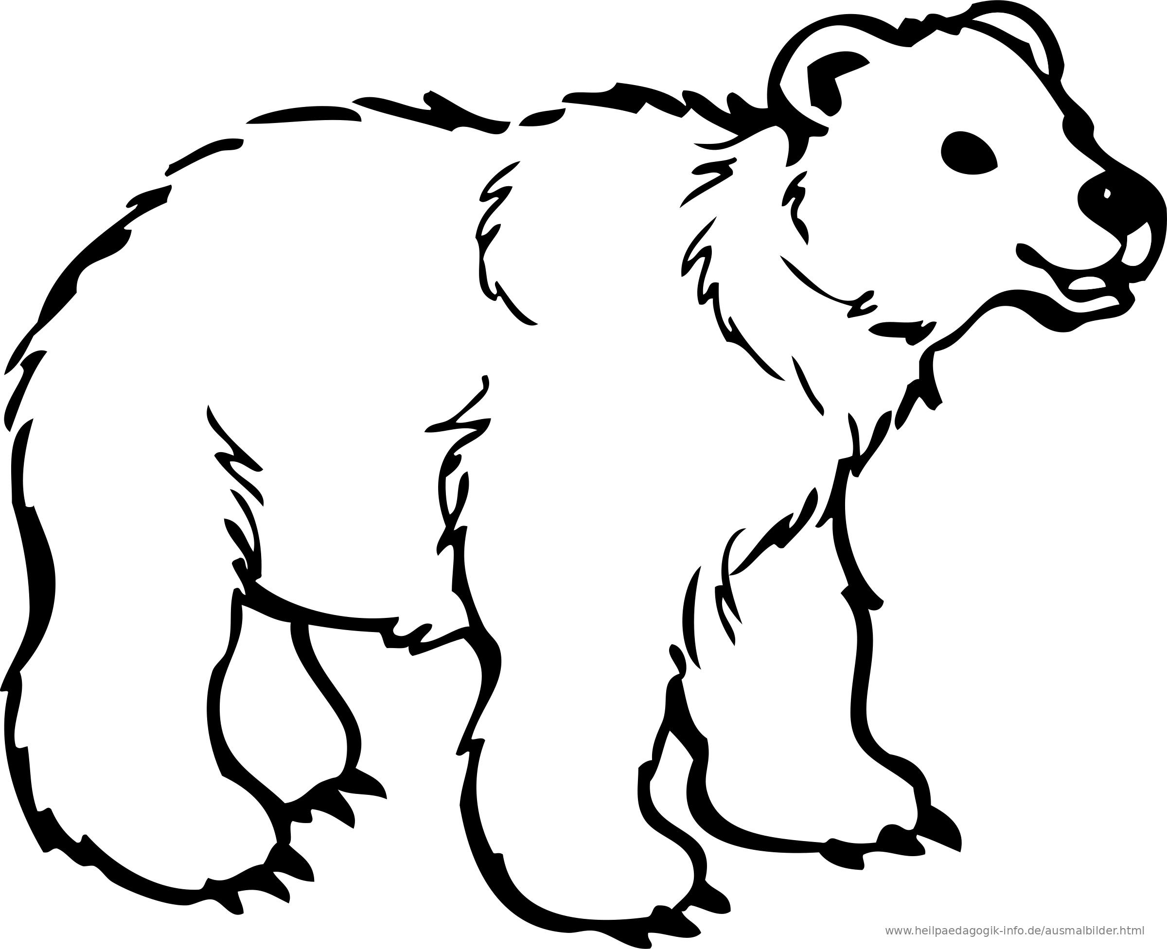 Charmant Baby Eisbär Malvorlagen Galerie - Malvorlagen Von Tieren ...