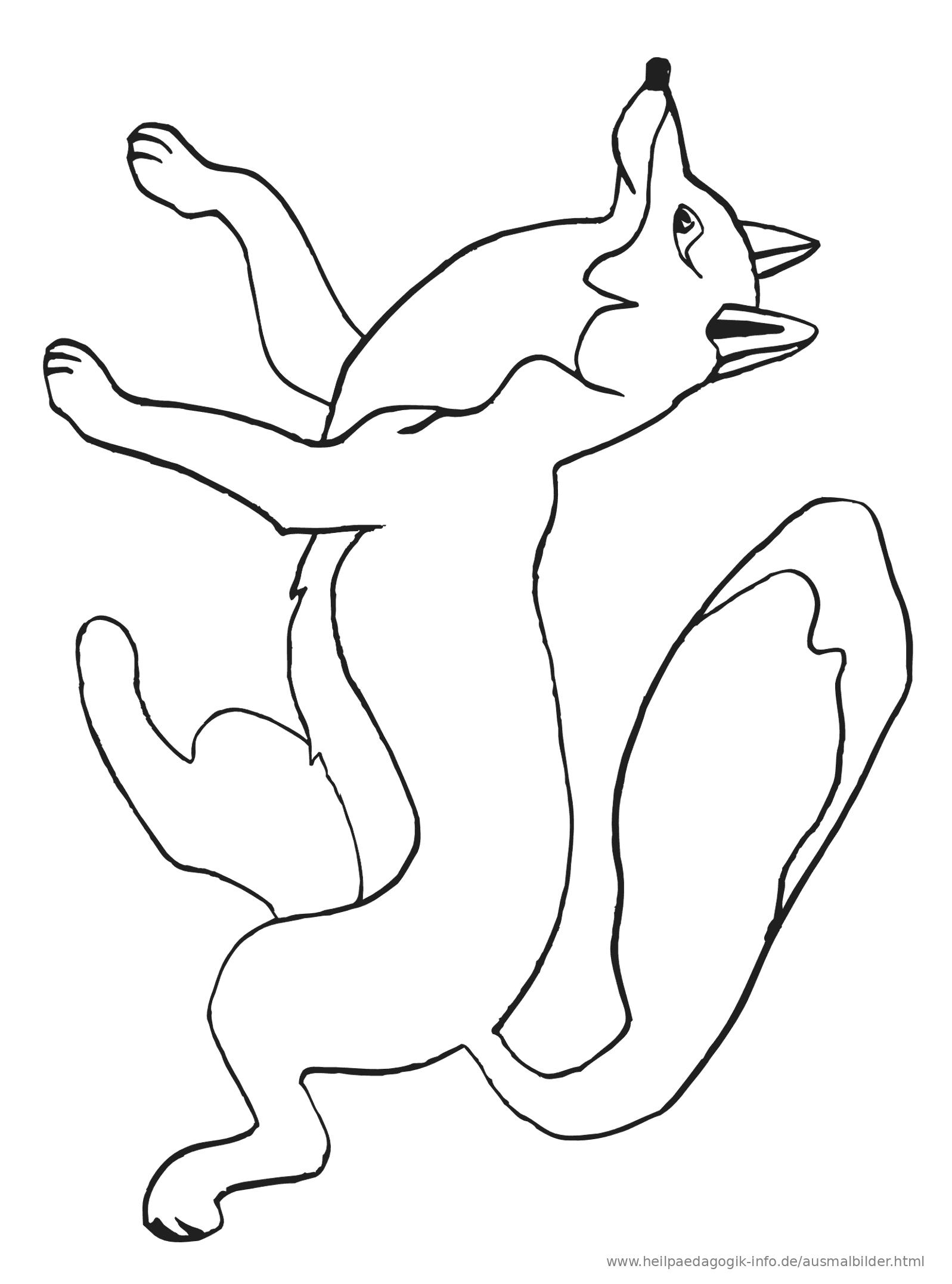 ausmalbilder sonstige tiere