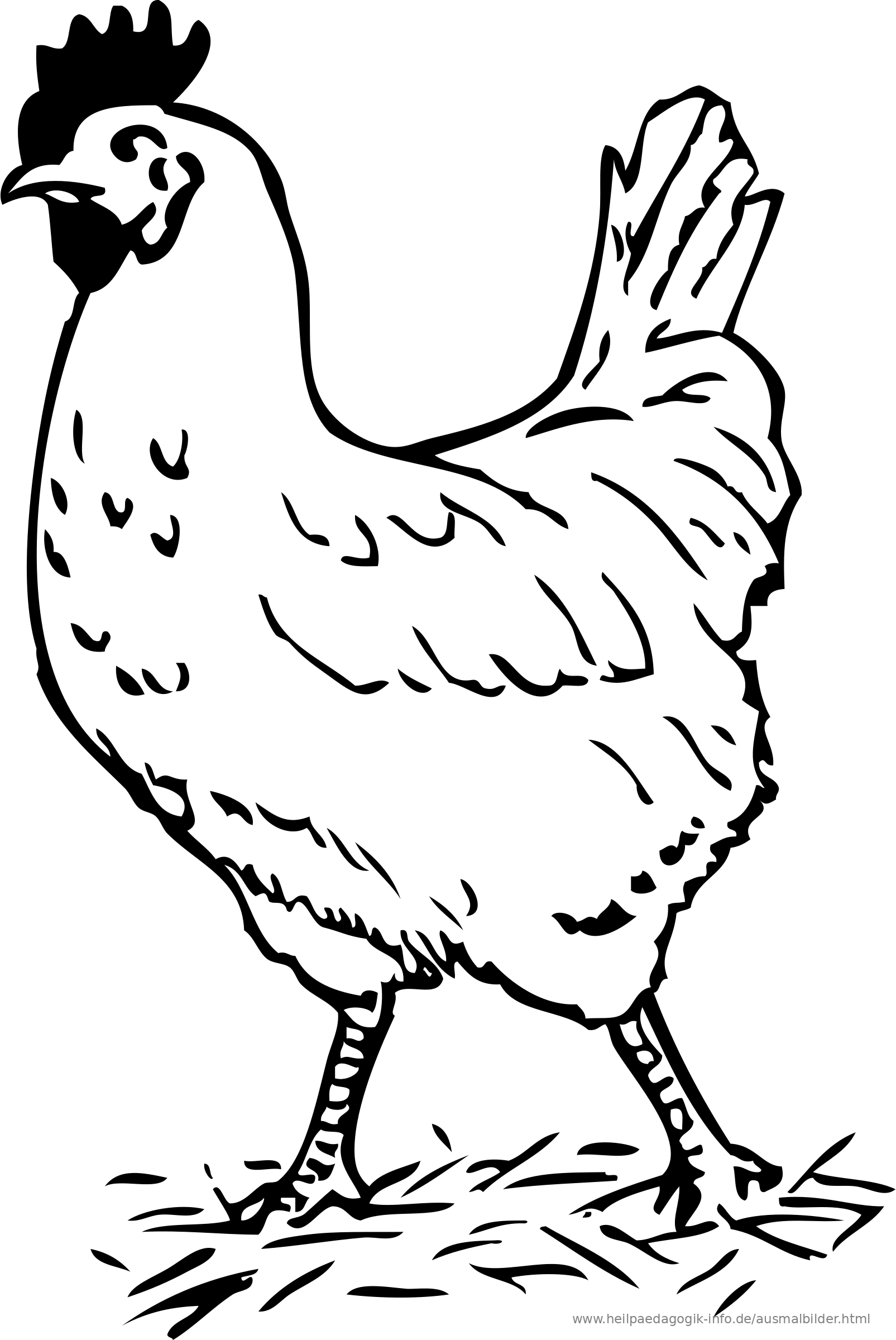 Viewtopic in addition Bone Structure Birds Bird Bone Anatomy Human Anatomy Lesson 2 in addition Personal Biochar Kilns Portable Factories Diy Septic Cleaning And Guerrilla Grafting as well Livestock Tests And Study Guides besides Avian Vent and Cloaca   Anatomy  26 Physiology. on poultry diagram