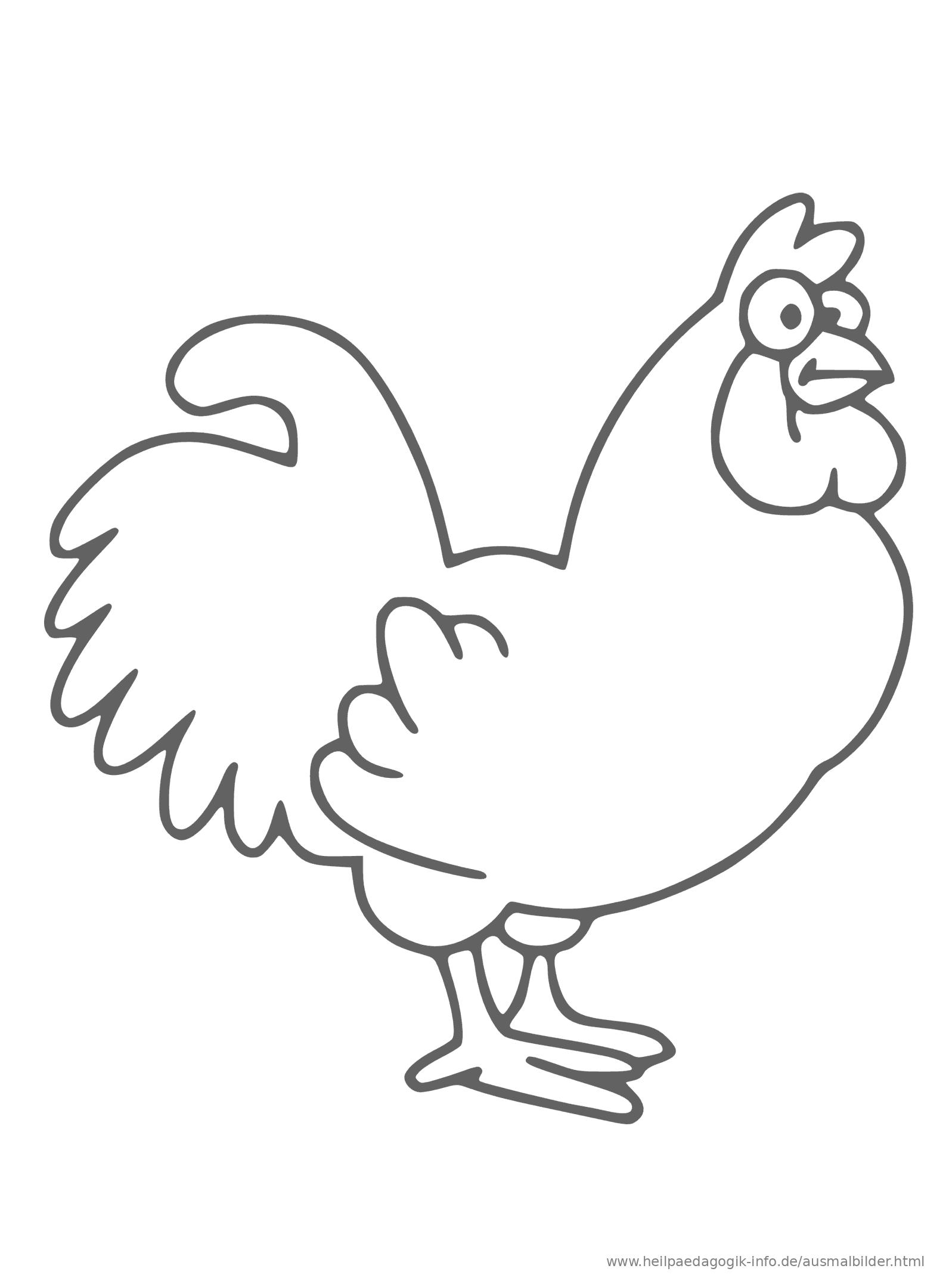 ausmalbilder für kinder vögel  ausmalbilder