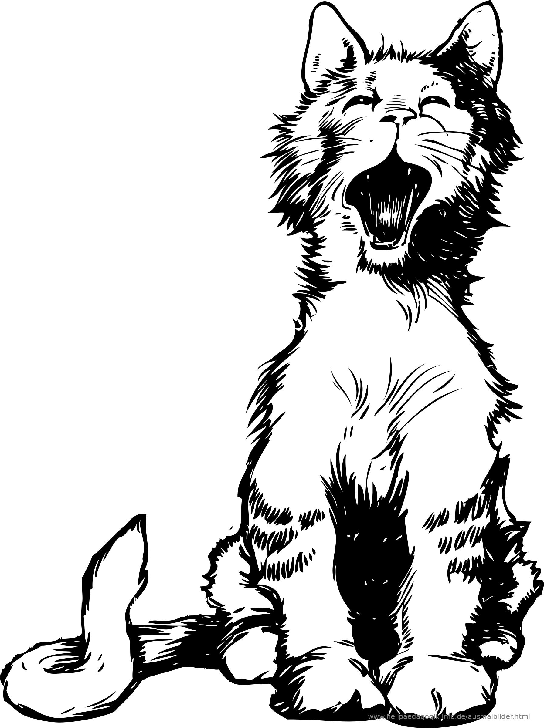 Ausmalbild Katze Als PDF oder PNG anzeigen