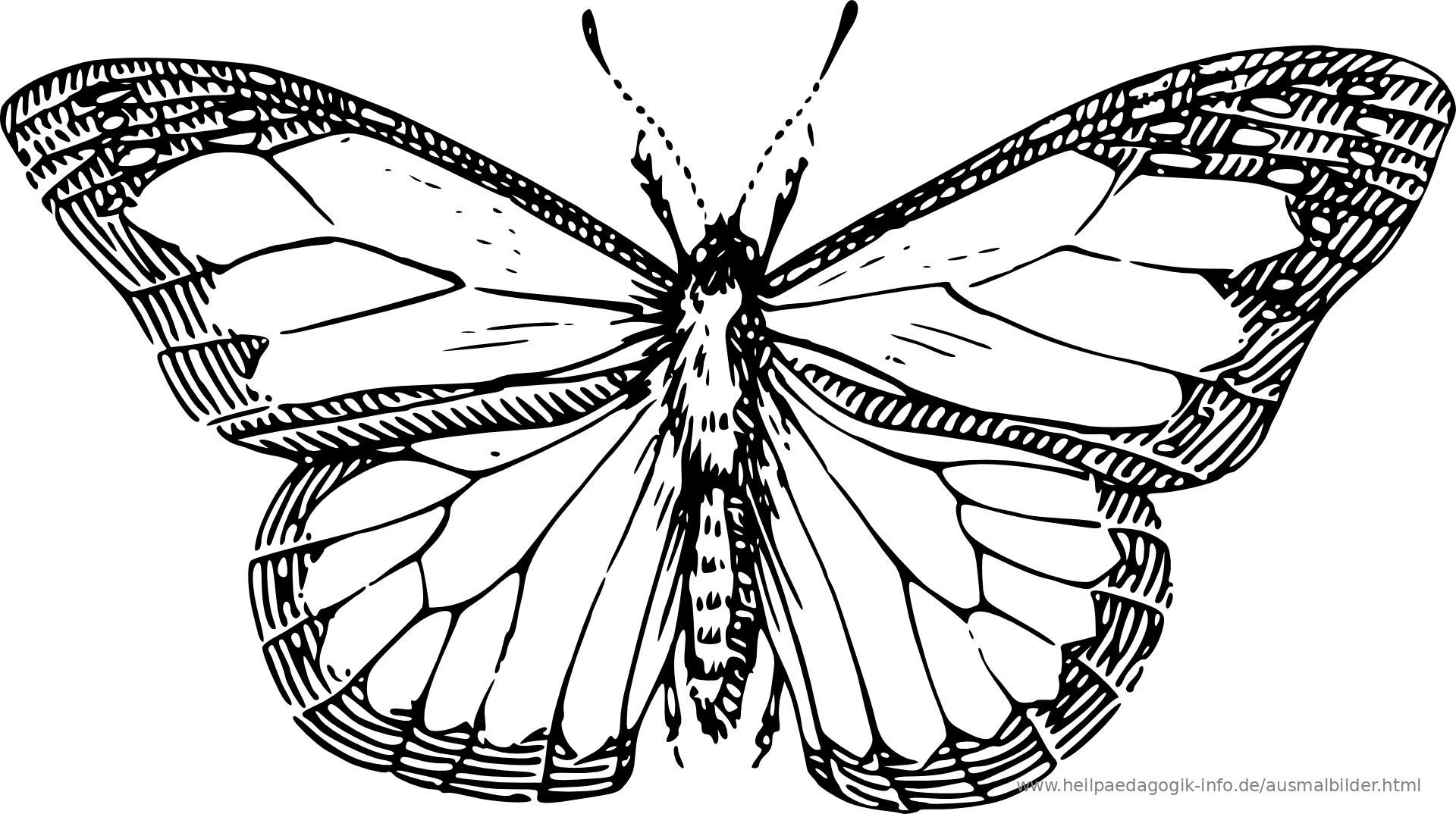 Line Drawing Year : Ausmalbilder käfer schmetterlinge insekten