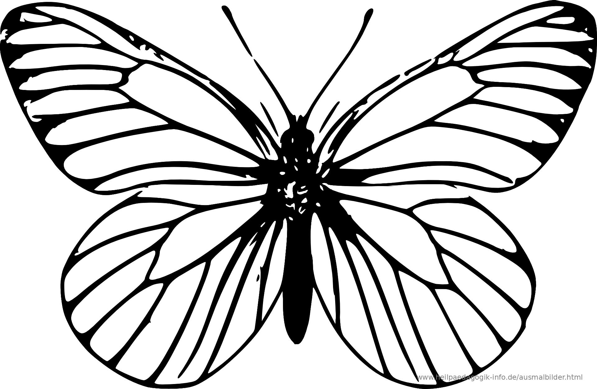 Ausmalbild Schmetterling Als PDF oder PNG anzeigen